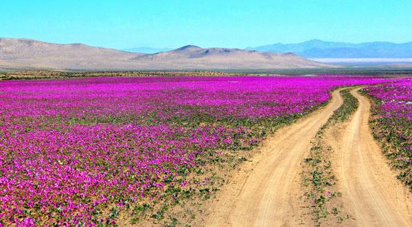 Atacama Desert Antofagasta Region, Chile