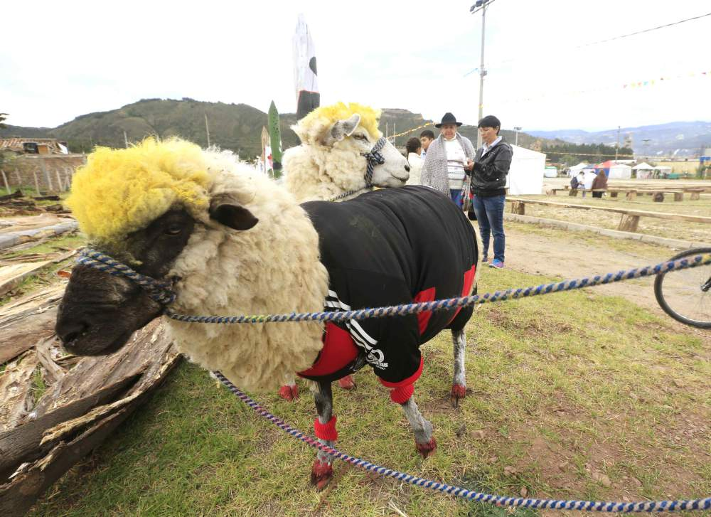A sheep, dressed in a jersey in the colours of Germany's national soccer team, is seen during an exhibition, prior to the 2014 World Cup in Brazil, in Nobsa