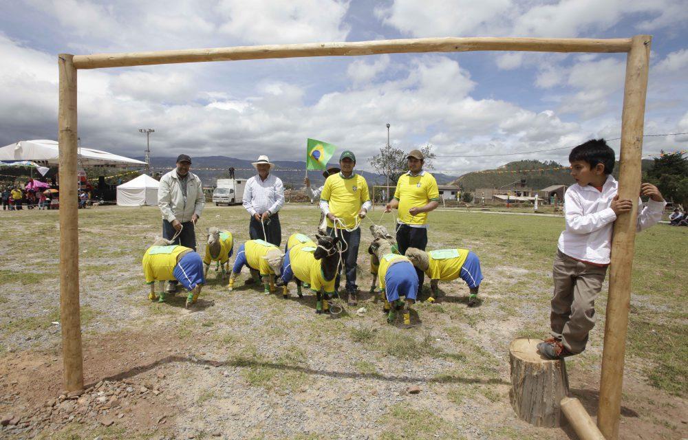COLOMBIA_WORLD_CUP_SHEEP_XRM101-2014JUN01_211828_868.jpg