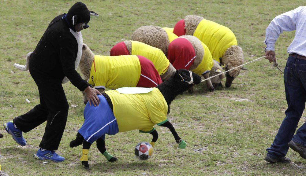 COLOMBIA_WORLD_CUP_SHEEP_XRM103-2014JUN01_212035_874.jpg