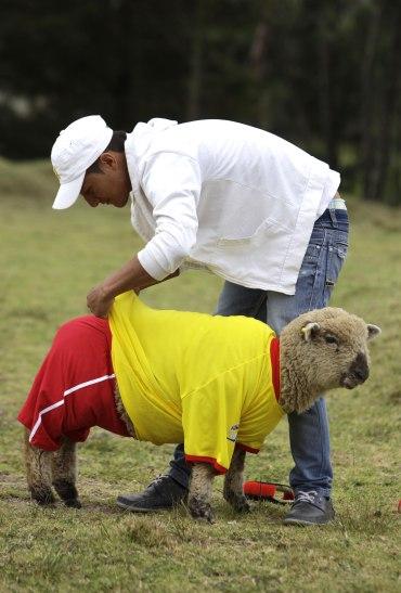 COLOMBIA_WORLD_CUP_SHEEP_XRM105-2014JUN01_212230_877.jpg