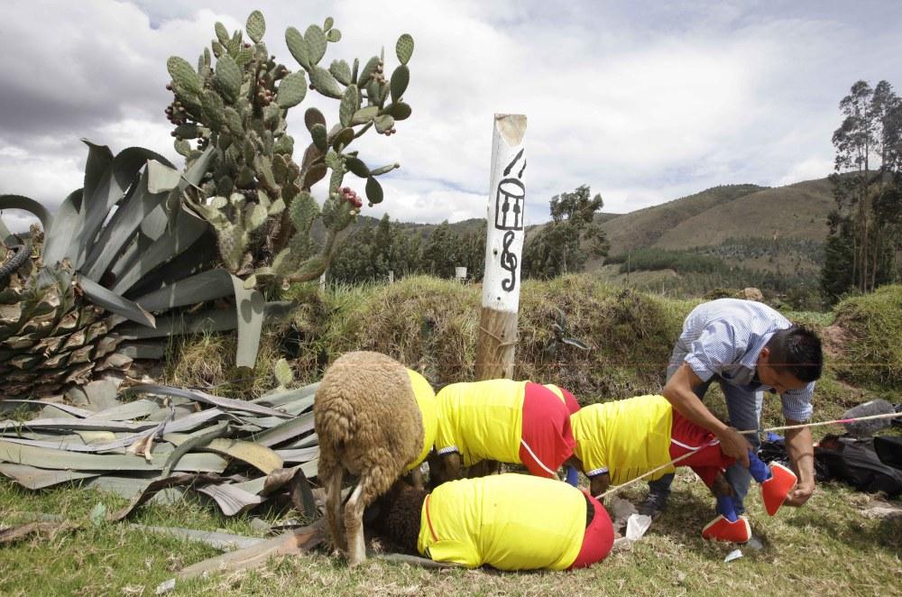 COLOMBIA_WORLD_CUP_SHEEP_XRM104-2014JUN01_212342_275.jpg