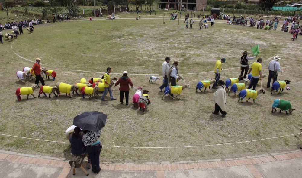 COLOMBIA_WORLD_CUP_SHEEP_XRM102-2014JUN01_212538_884.jpg