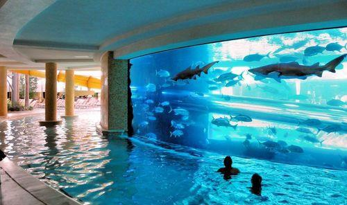 Pool With Sharks