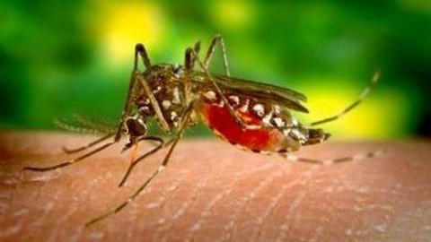 komarec_majkatiitatkoti