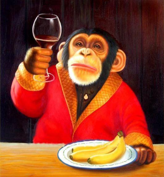 bravo majmune_majkatiitatkoti