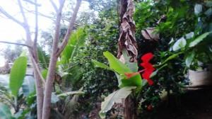 cveke_equador