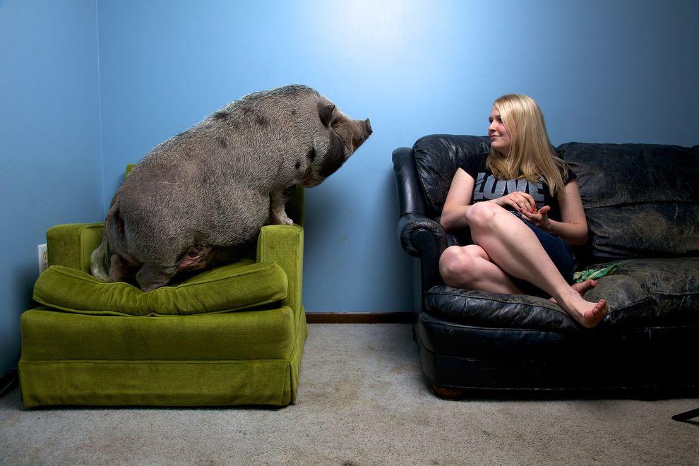 svinja i devojka_majkatiitatkoti
