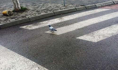 ptica na pesacki_majkatiitatkoti