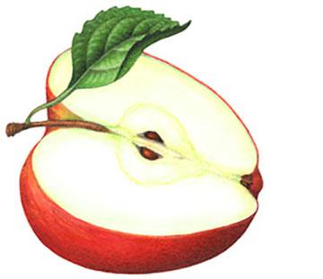 jabolka pola_majkatiitatkoti