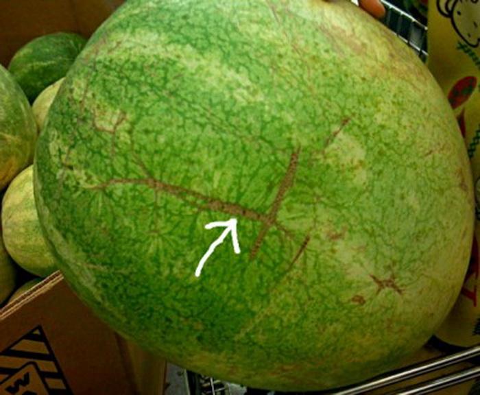 lubenica zrela