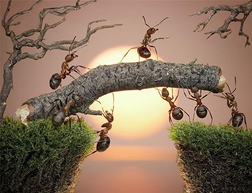 mravki-pocetna_majkatiitatkoti