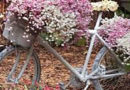 Со пролетта си доаѓа и точакот