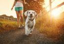 Зошто ги исмевате луѓето што бараат да си ги прошетаат домашните миленици… Зошто?